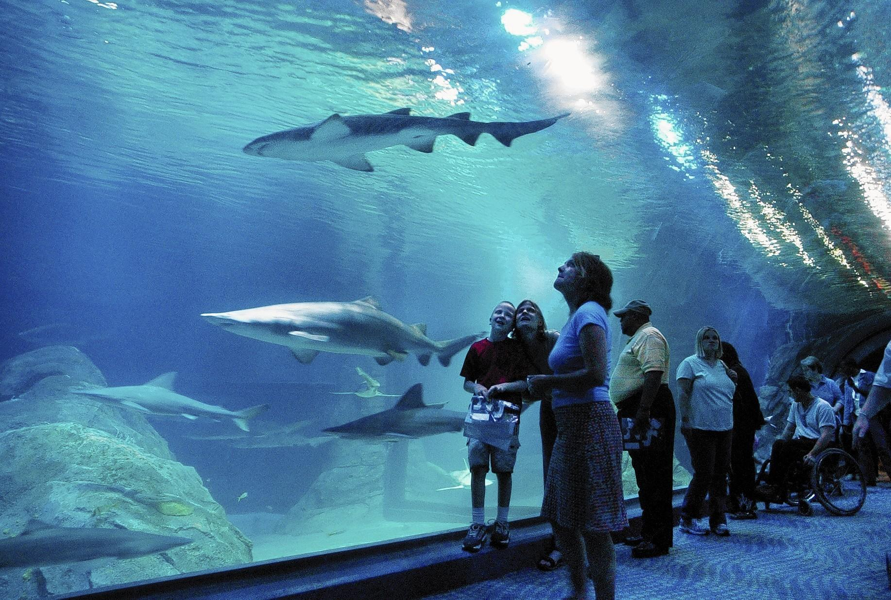 The Adventure Aquarium in Camden is the fifth largest in the country, and has the largest collection of sharks on the East Coast.