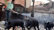 Egypt reports 16 swine flu deaths