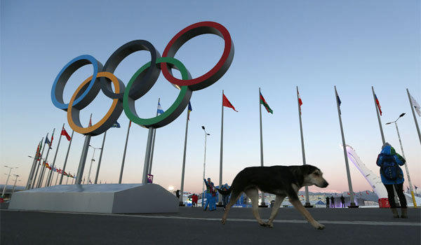A stray dog photographed in Sochi's Olympic Park three days before the start of the 2014 Winter Olympics.