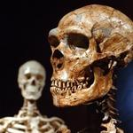 Neanderthal DNA shows that man's family tree is decidedly gnarled
