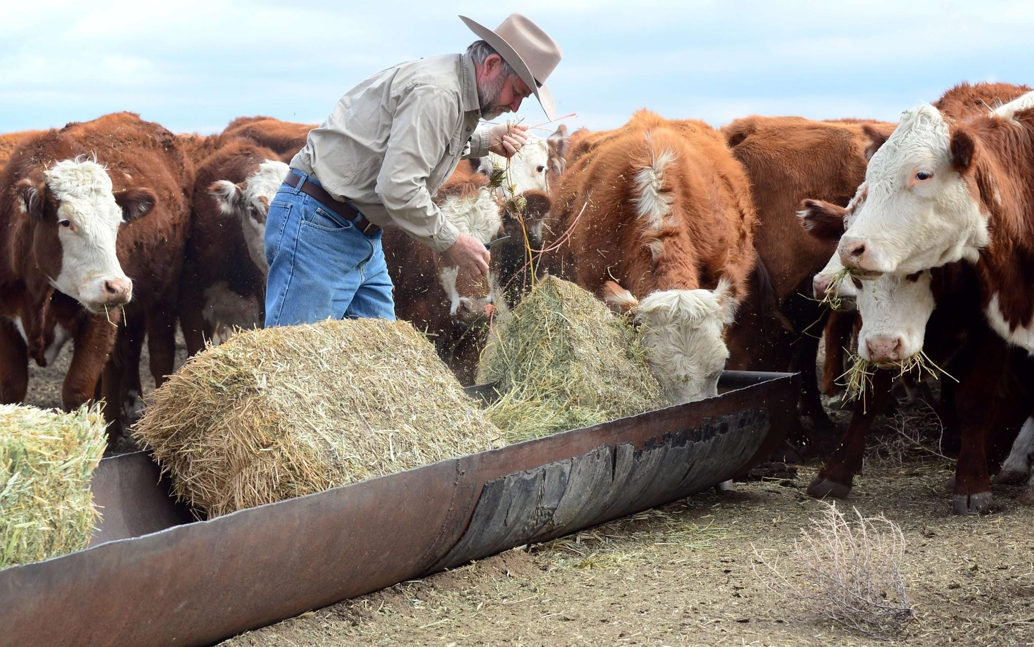 Usda To Open Sites To Help Farmers Ranchers Cope With