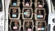Puppy mill ban introduced at City Council