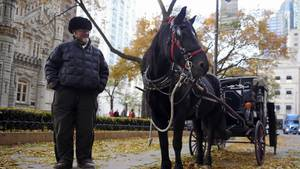 Burke wants to ban horse-drawn carriage rides in Chicago