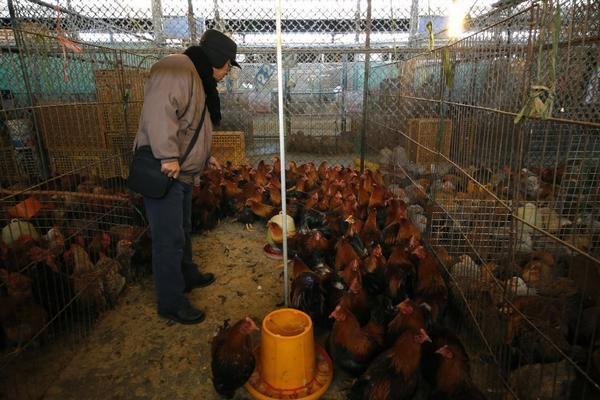 Chinese authorities have described the first known case of human infection with an H10N8 bird flu. They suspect the patient became ill at a live poultry market in China's Jiangxi Province, similar to this one in Shanghai.
