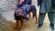 Taliban says captured British military dog is healthy