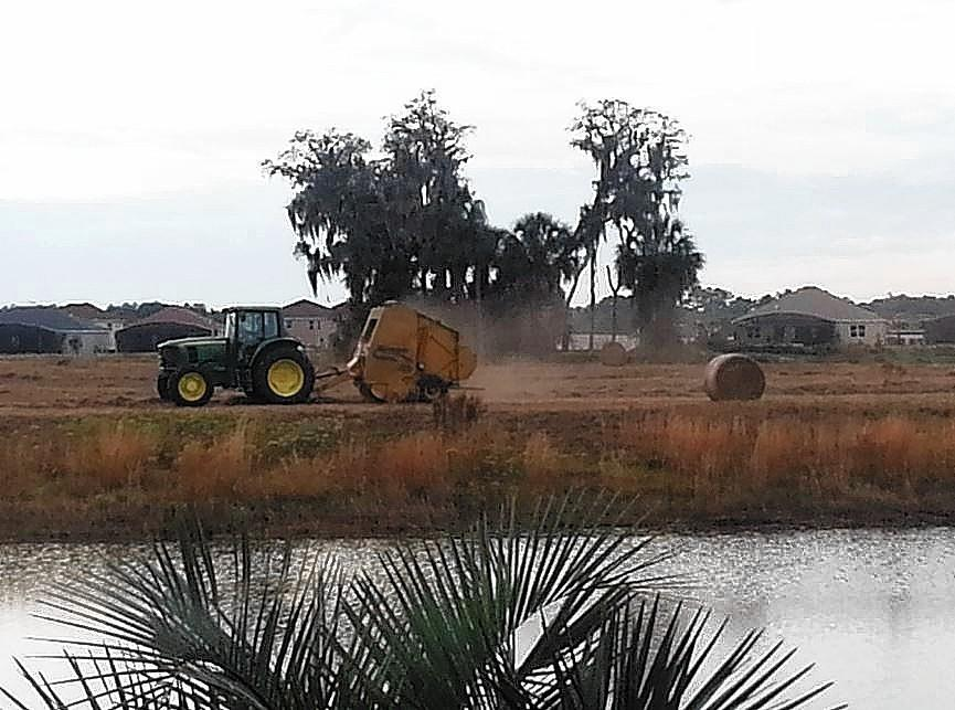 Mount Dora city officials captured this tractor processing hay in the Lakes of Mount Dora subdivision in Dec. 2012.