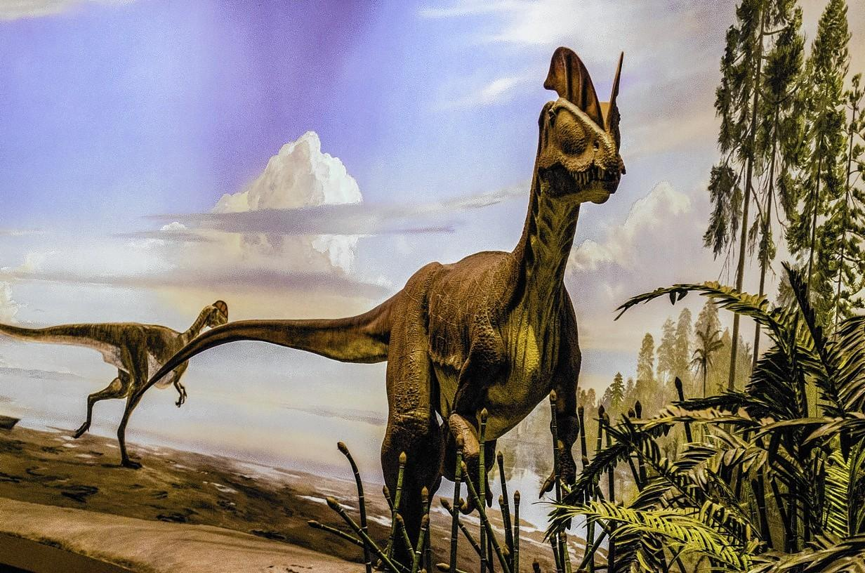 Dinosaur State Park in Rocky Hill is offering many vacation activities Feb. 15-16 and 18-23.