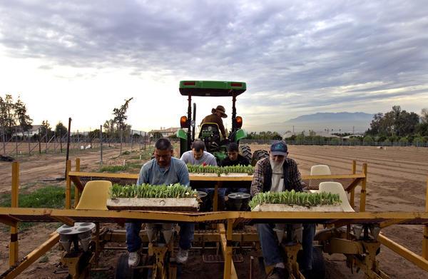 LAUSD food effort makes local farms healthier too