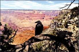 A bird's-eye view of the Grand Canyon