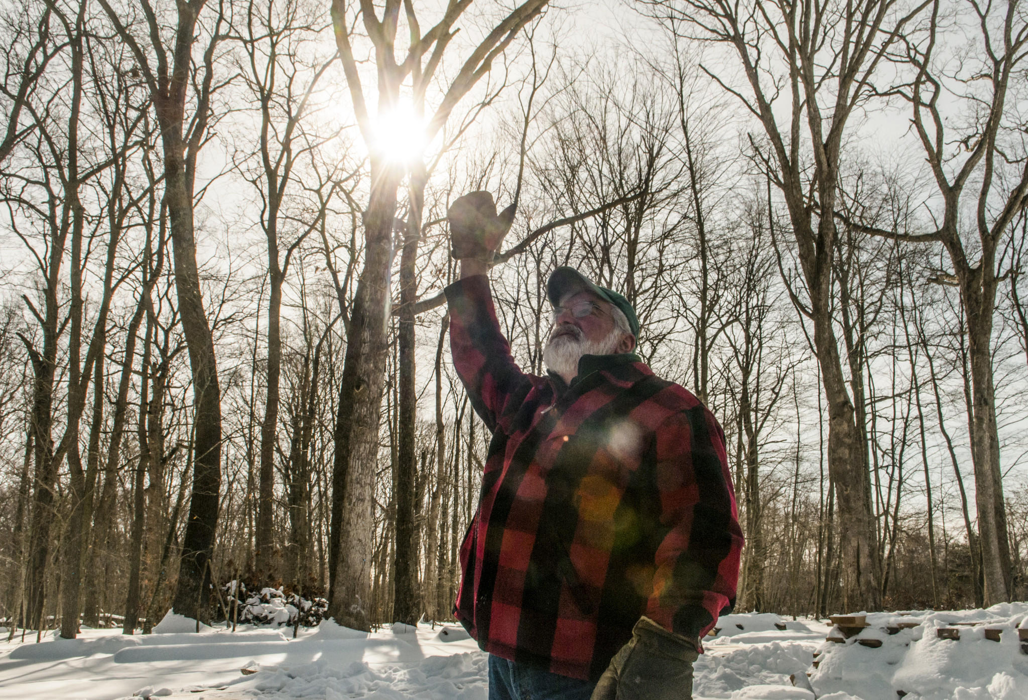 UConn Professor Tom Worthley scans a section of UConn Forest that has been thinned to develop storm and tree research.