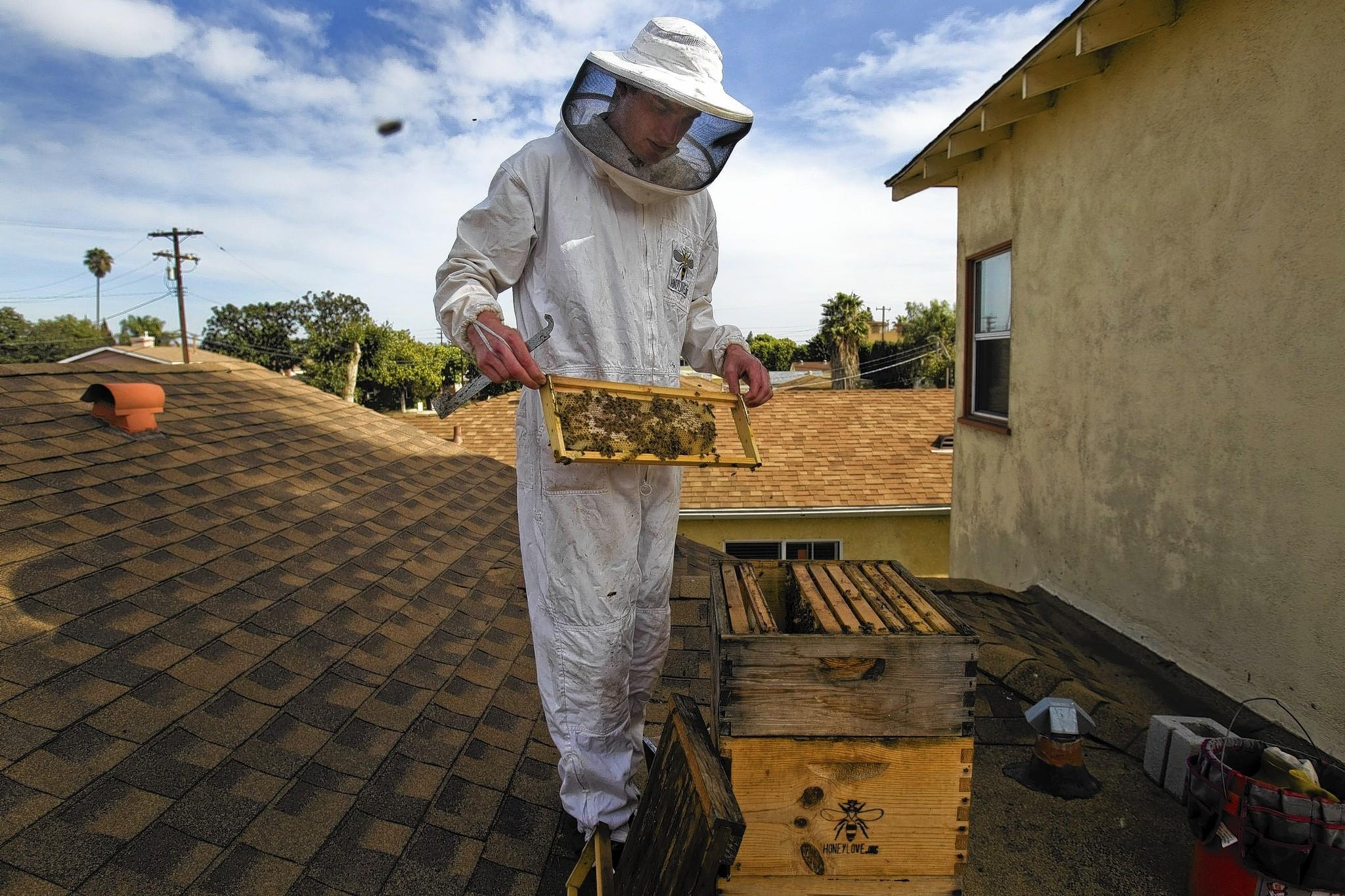 l a backyard beekeeping picking up buzz latimes
