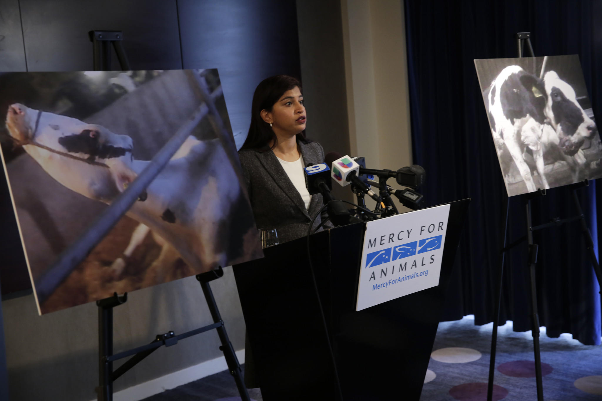 Mercy For Animals general counsel Vandhana Bala releases a hidden-camera video during a press conference showing animal abuse at Wiese Brothers Farms in Greenleaf, Wis. on Dec. 10.