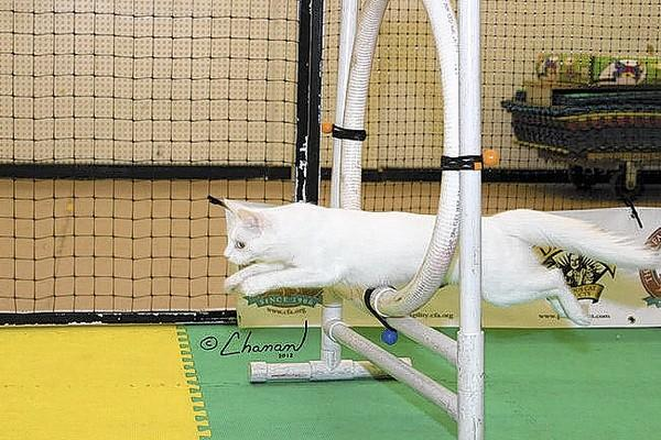 Agility demonstrations will be part of the World of Pets Expo at the Hampton Roads Convention Center