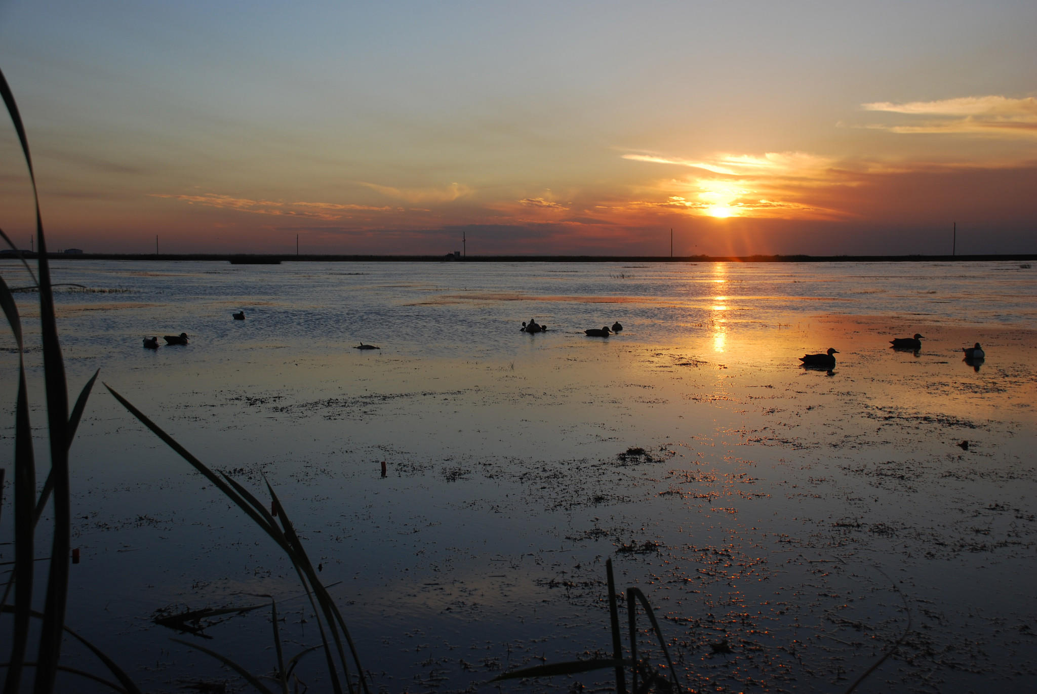 The sun sets over a decoy spread at Stormwater Treatment Area 1 West, one of the best places in the country to hunt ducks.
