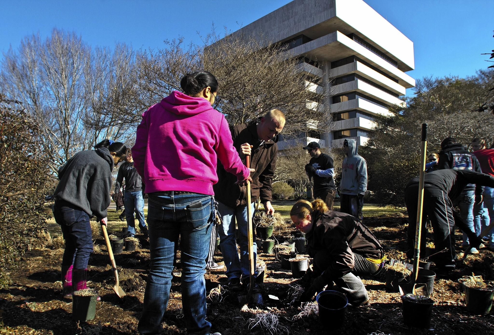 Crew members from the aircraft carrier USS Abraham Lincoln planted about 1000 plants in and around Honor Park next to Hampton City Hall as part of Friday's volunteering effort.