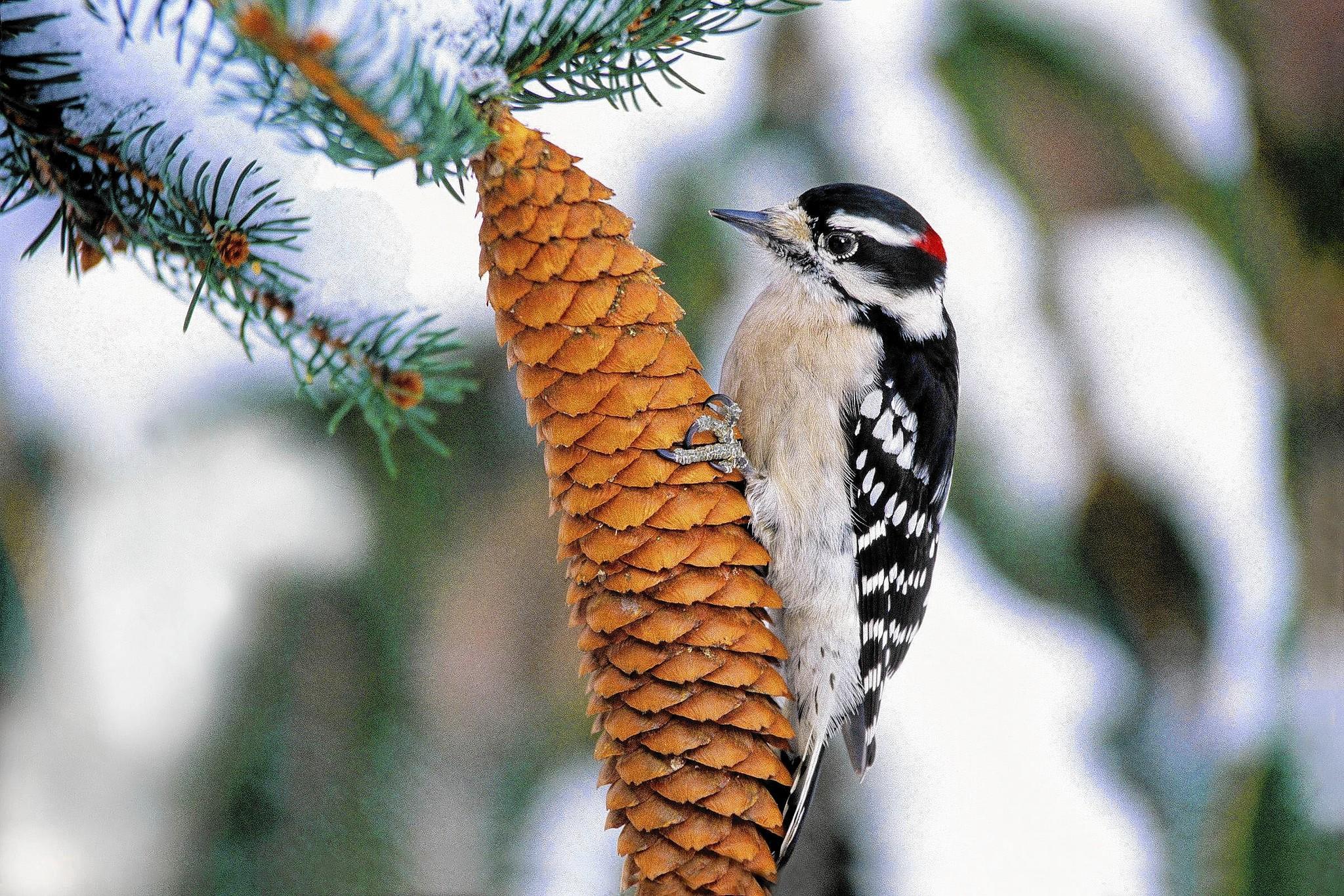 the bird friendly garden tribunedigital chicagotribune