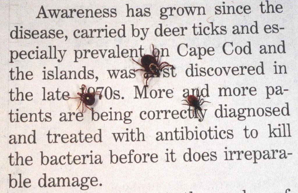 Three of the top eight reportable diseases in town were caused by tick bites.