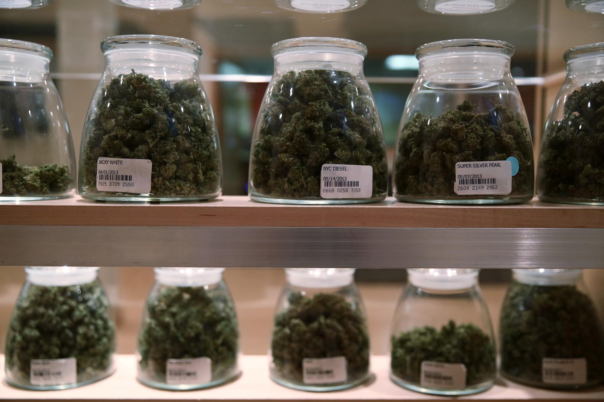 Jars containing various strands of medical marijuana sit behind a display case for awaiting patients.