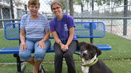 Shelter dog finds home in 2 hours thanks to Facebook