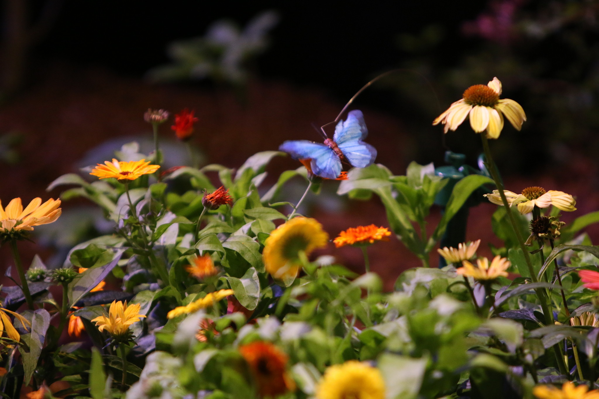 Pictures Flower And Garden Show Hartford Courant
