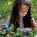 Picking blueberries in South Glastonbury