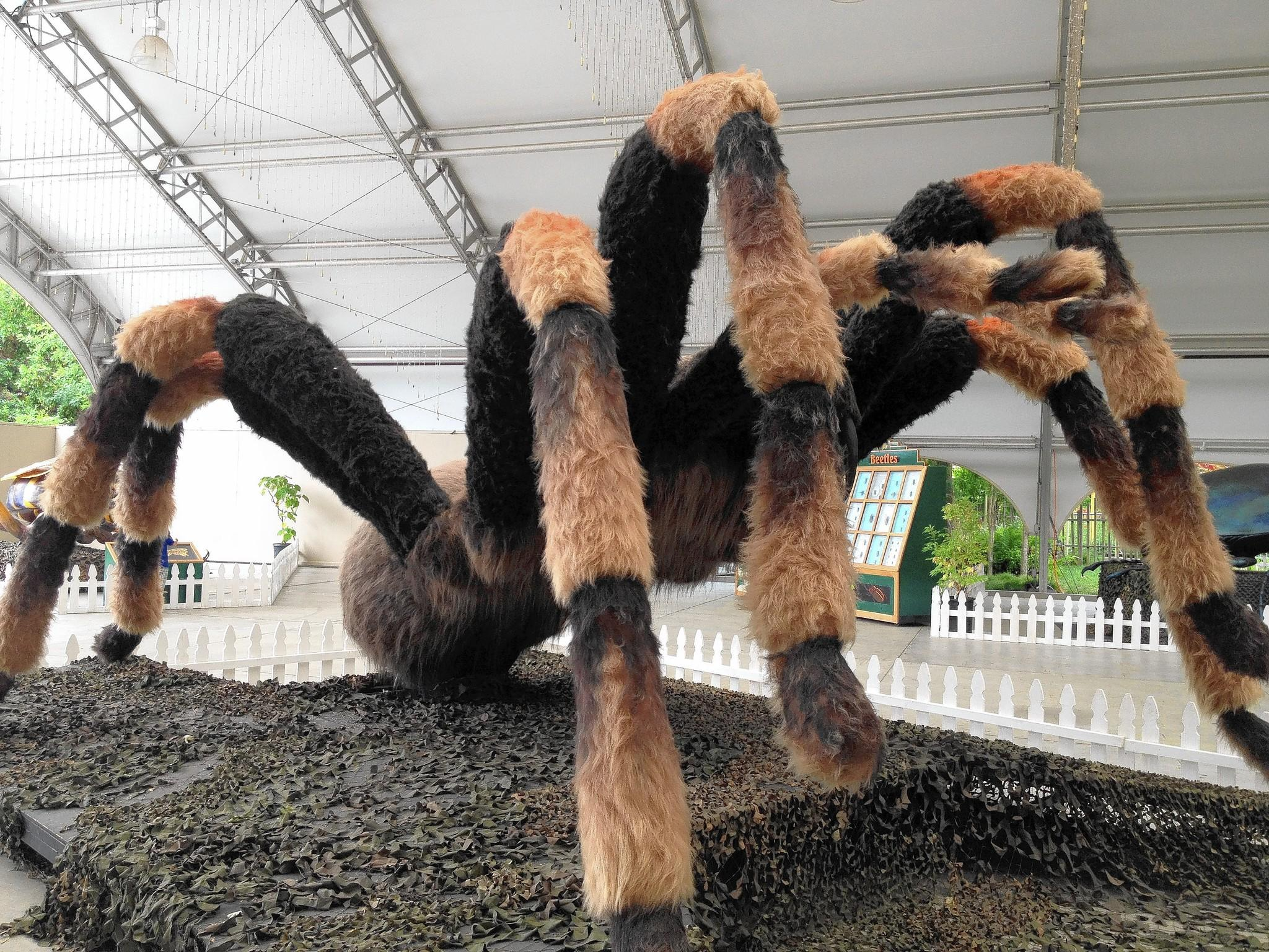 An 11-foot-tall tarantula is part of the interactive bug exhibit at the Mashantucket Pequot Museum & Research Center through May 17.