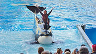 SeaWorld files complaint against OSHA investigator who probed trainer's death
