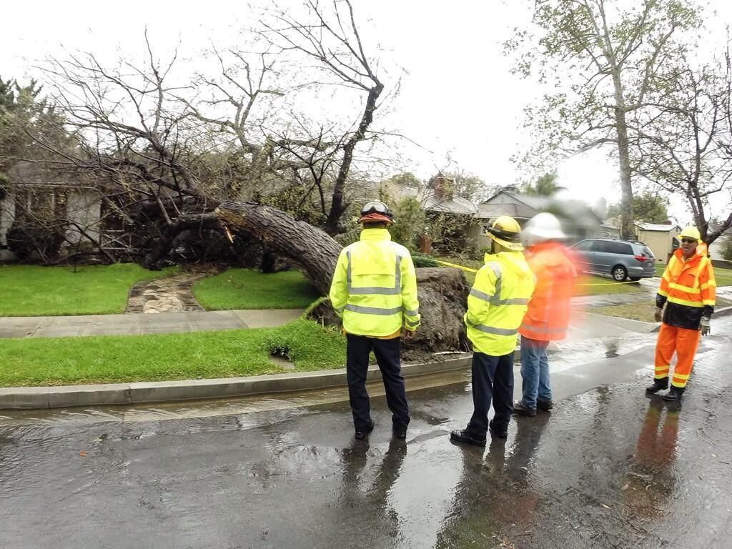 Crews were called to a Burbank home at 330 N. Beachwood Dr., just south of Magnolia Boulevard, on Friday, Feb. 28, 2014. A woman in her 80s was home when the tree fell on her house. She escaped the residence without any injuries.
