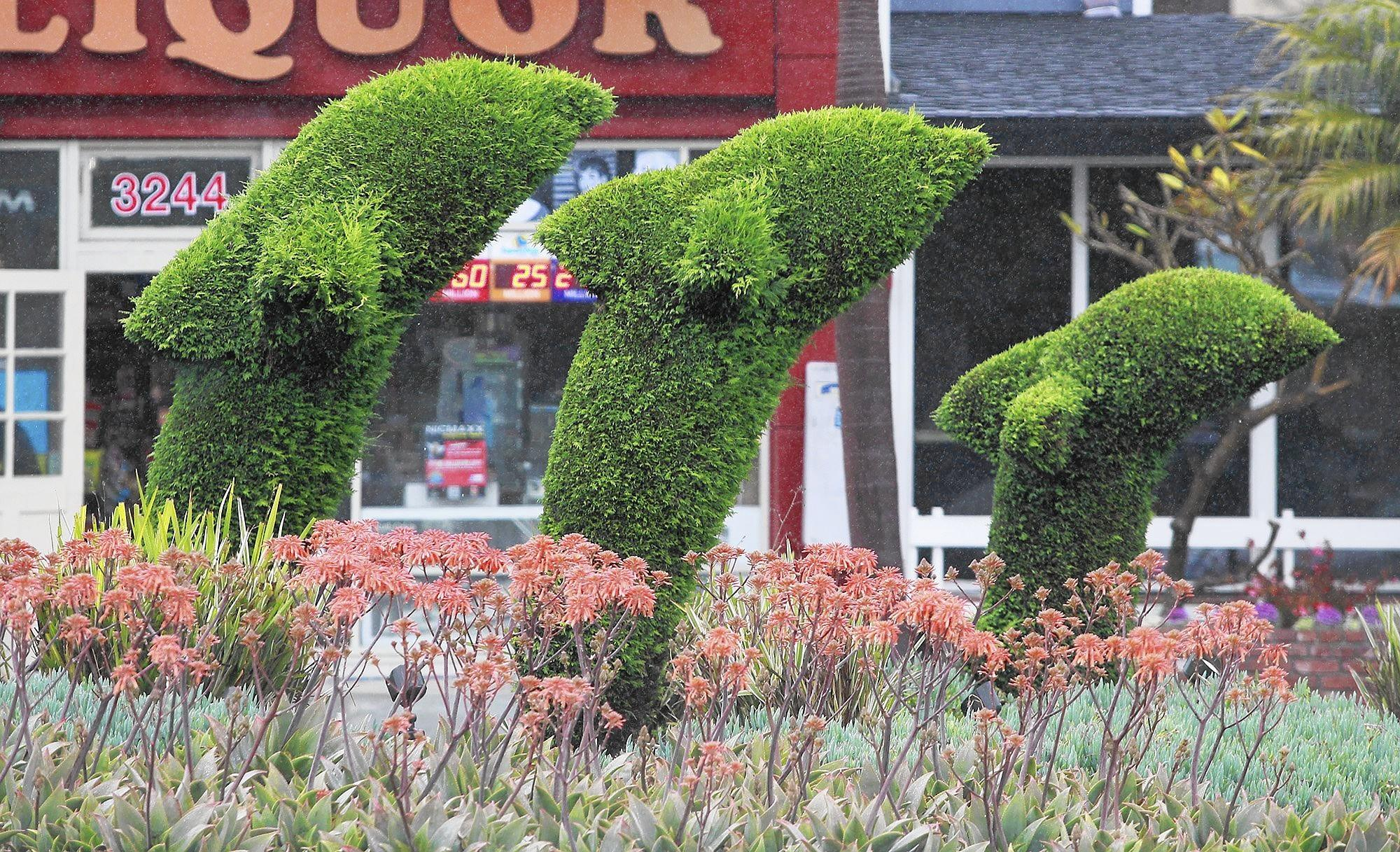 The city of Newport Beach will replace the 12 overgrown dolphin topiaries in Corona del Mar with new ones this fall.