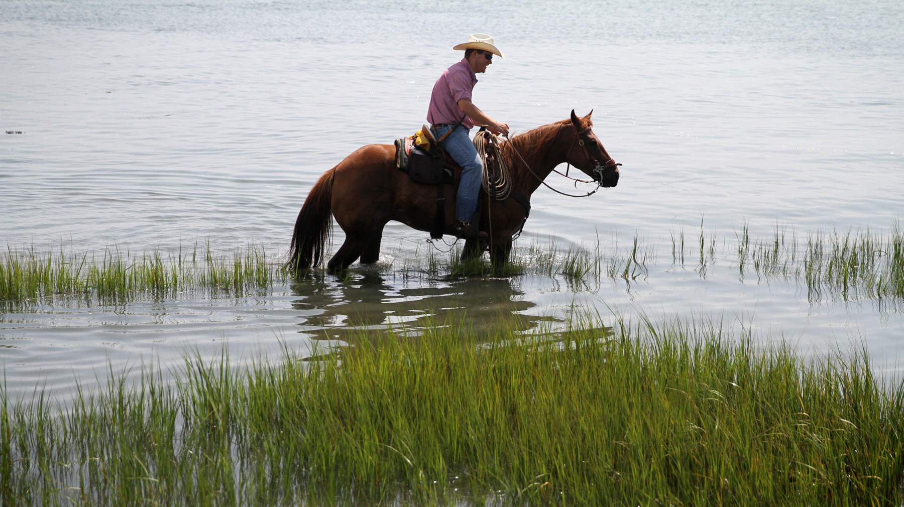 A 'saltwater cowboy,' as the volunteer firefighters are called, waits for the ponies to swim from Assateague Island to Chincoteague Island.