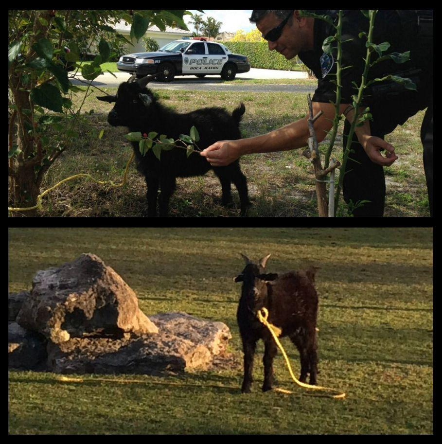 Boca Raton Officer Jimmy Jalil responded to rescue the animal.