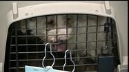Video: Aldermen pass anti-puppy mill ordinance