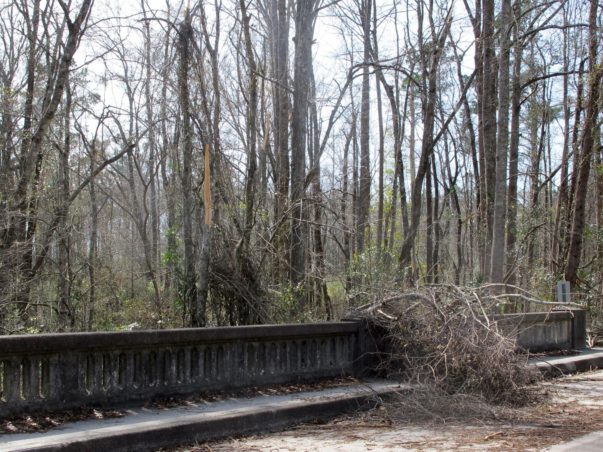 Trees near Lodge, S.C., show damage from the February ice storm.