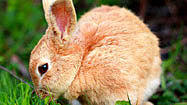 Pictures: Fuzzy adorable bunnies