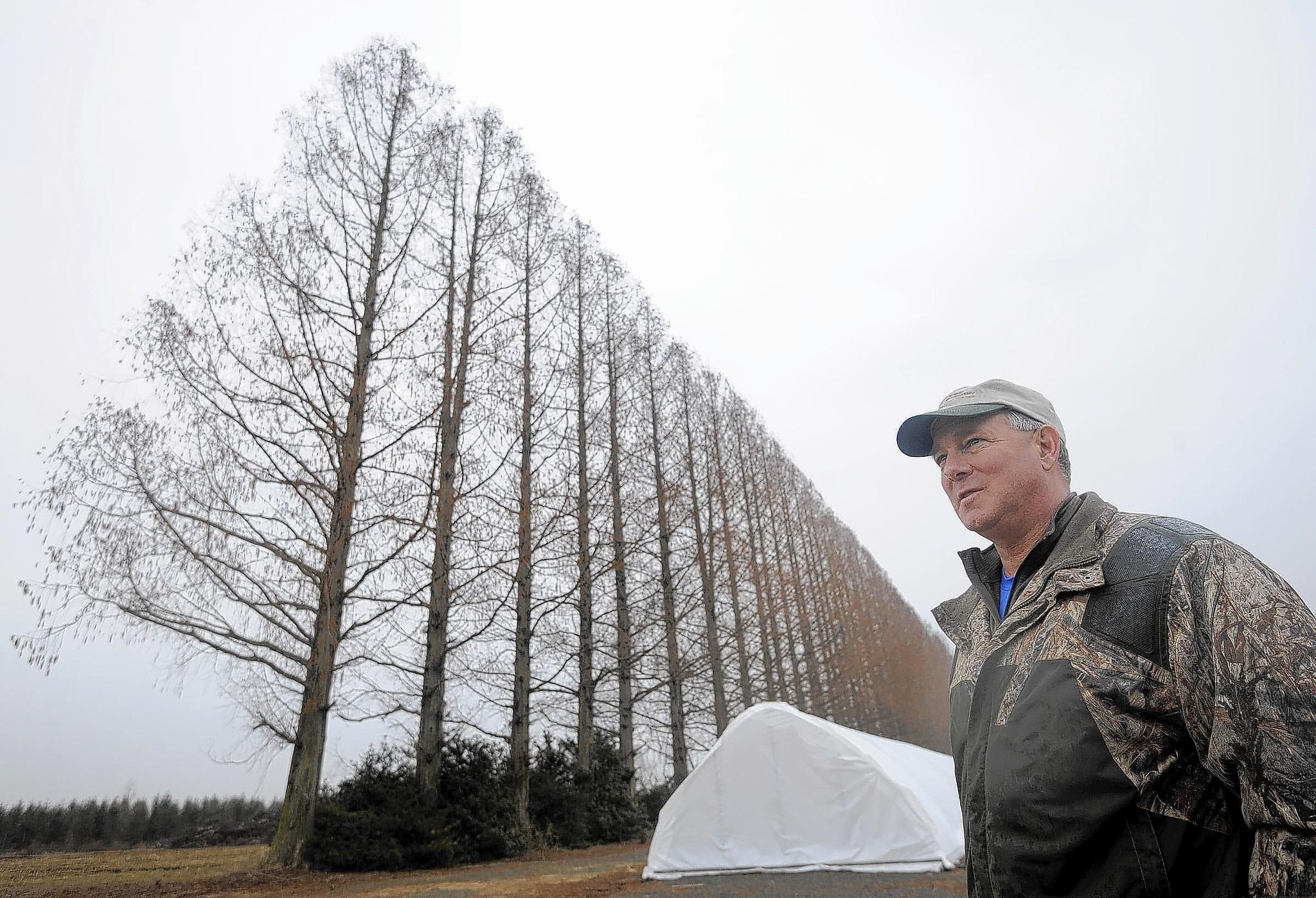 Bernie Kohl Jr., owner of Angelica Nurseries, is pictured on his property with dawn redwoods.