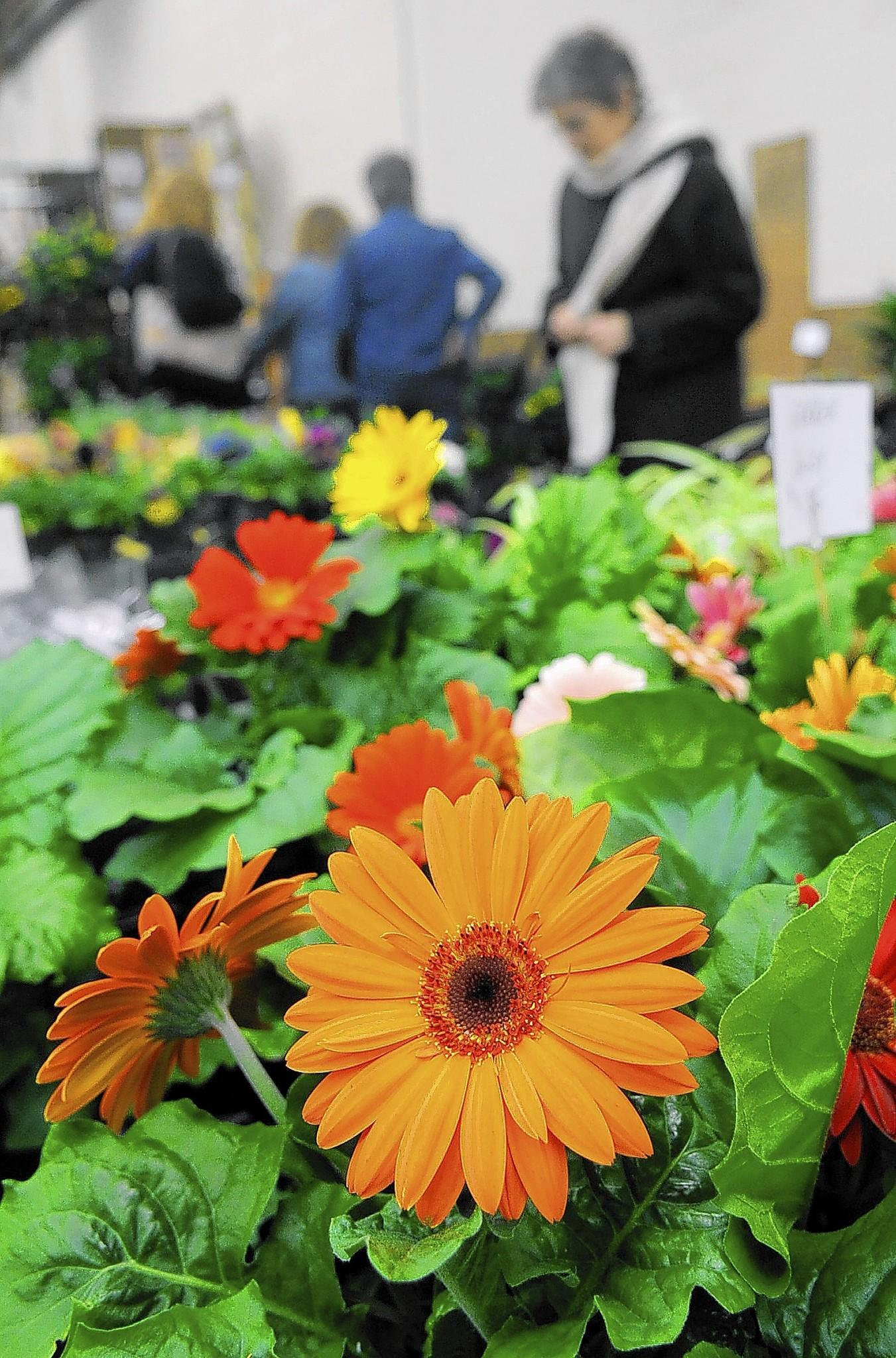 The fourth annual Valley Flower, Garden and Pool Show is at the Agri-Plex this weekend.