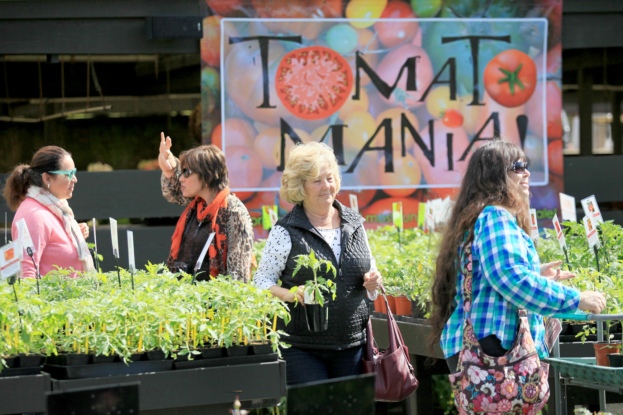 The third annual TomatoMania! at Roger's Gardens in Newport Beach carries more than 150 different types of tomato plants.