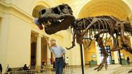 David Layman on situating Field Museum's Sue