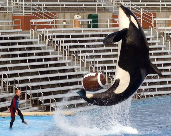 Legislation would make it illegal to breed, import, export or keep killer whales for entertainment purposes in California