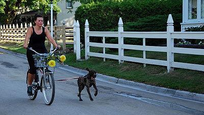 Carriage Tour Mackinac With Dog