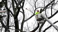 Trees draw scrutiny in battle to keep the lights on