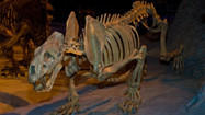 Florida Museum Guide: Florida Museum of Natural History, Gainesville