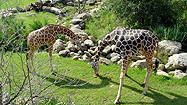 Florida Animal Attraction Guide: Brevard Zoo, Melbourne
