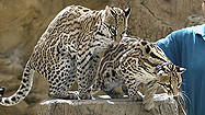 Florida Animal Attraction Guide: Naples Zoo at Caribbean Gardens
