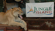 Florida Animal Attraction Guide: Jungle Island, Miami