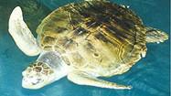 Florida Animal Attraction Guide: Clearwater Marine Aquarium