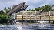 Florida Animal Attraction Guide: Dolphin Research Center, Grassy Key