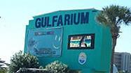 Florida Animal Attraction Guide: Florida's Gulfarium, Fort Walton Beach