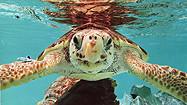Florida Animal Attraction Guide: Gumbo Limbo Nature Center, Boca Raton