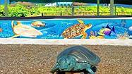 Florida Animal Attraction Guide: Loggerhead Marinelife Center, Juno Beach